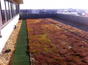 Grass Roofing